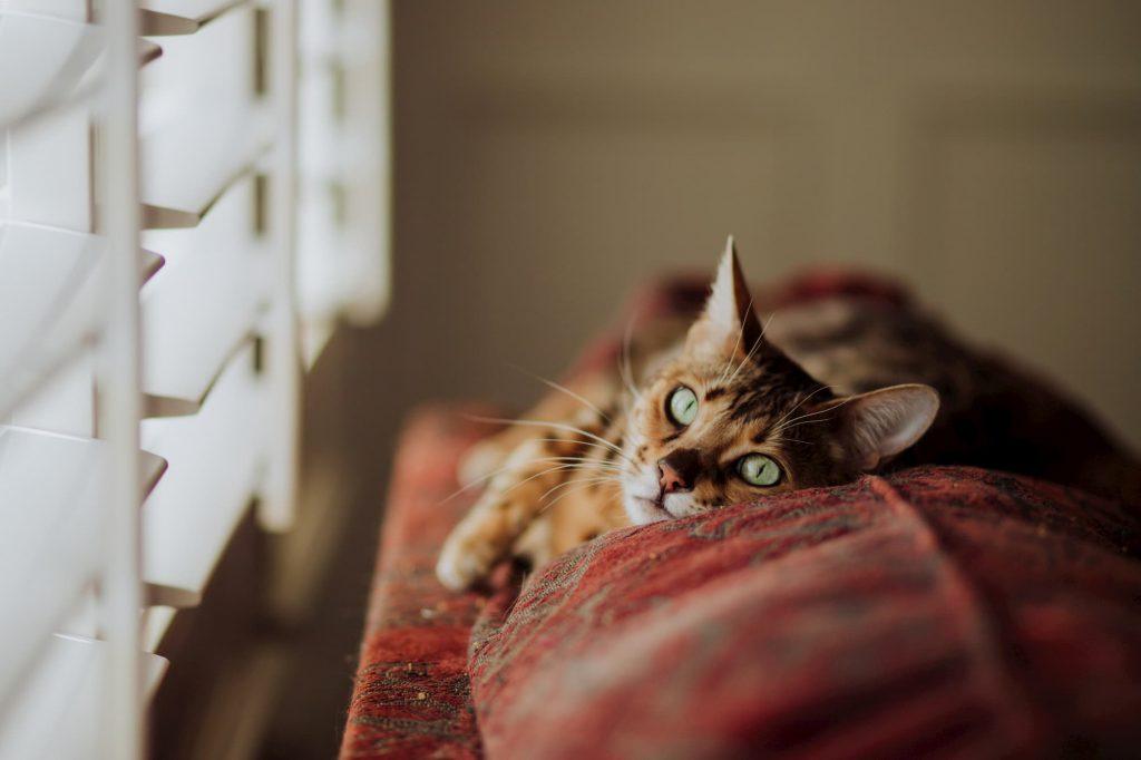 cat sleeping next to window