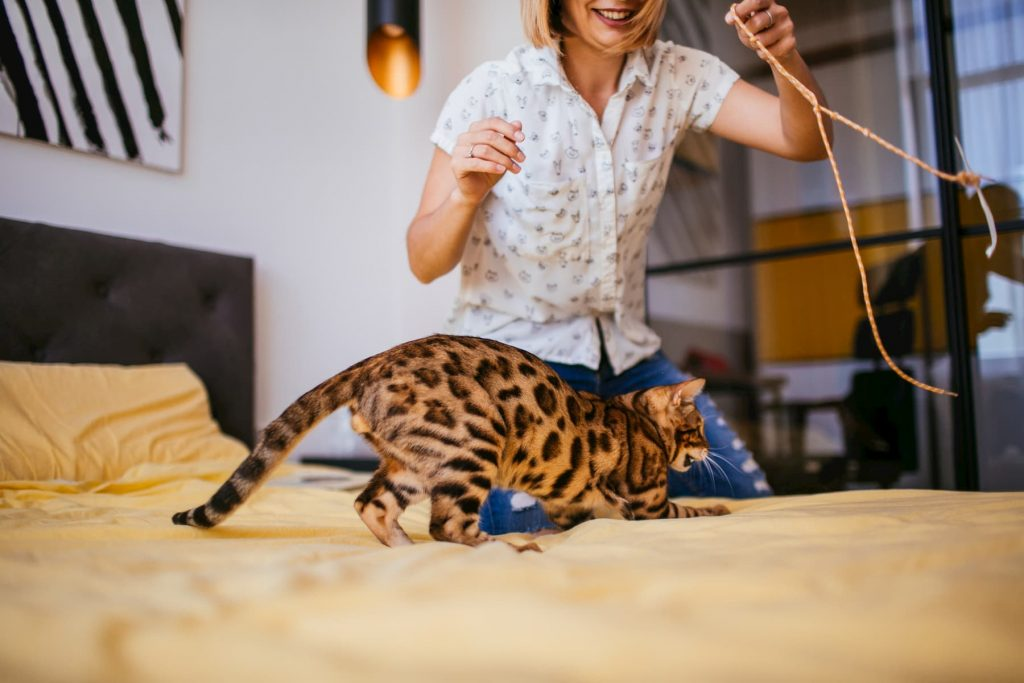 Bengal cat playing with rope on bed