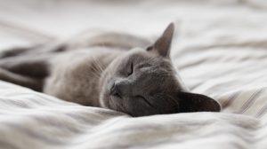 Gray cat laying on duvet