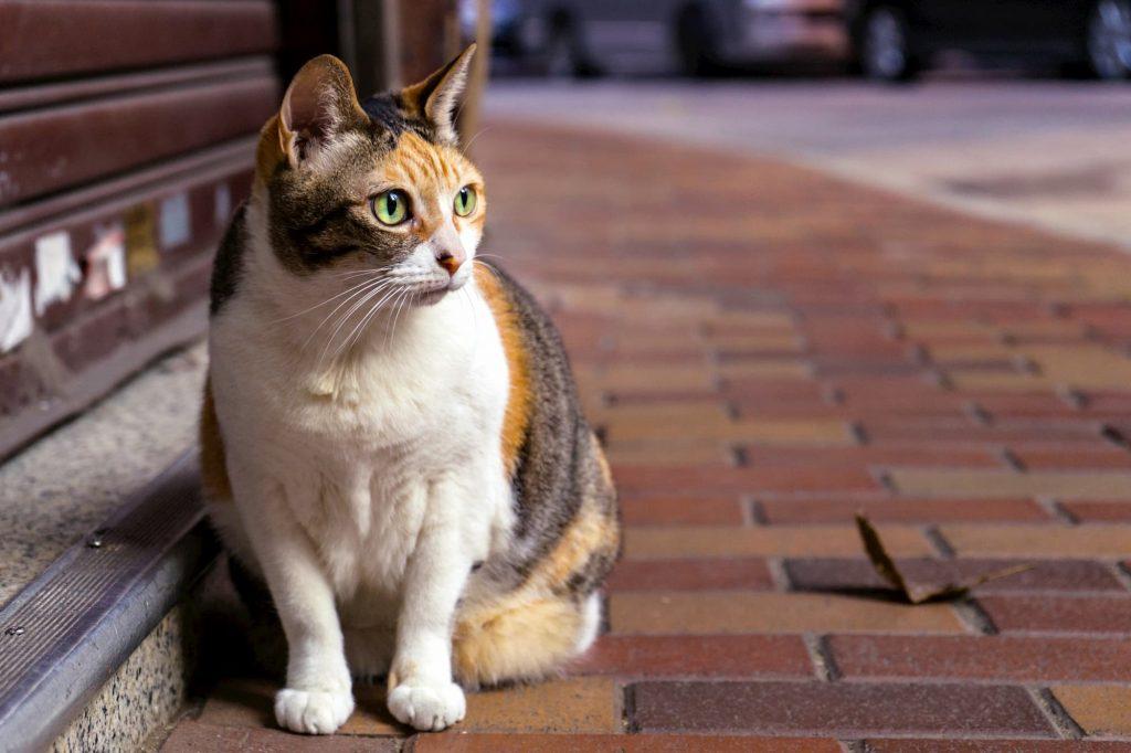 Cat sat on a pavement