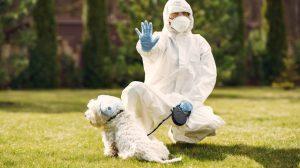 Dog walker in hazmat suit covid-19