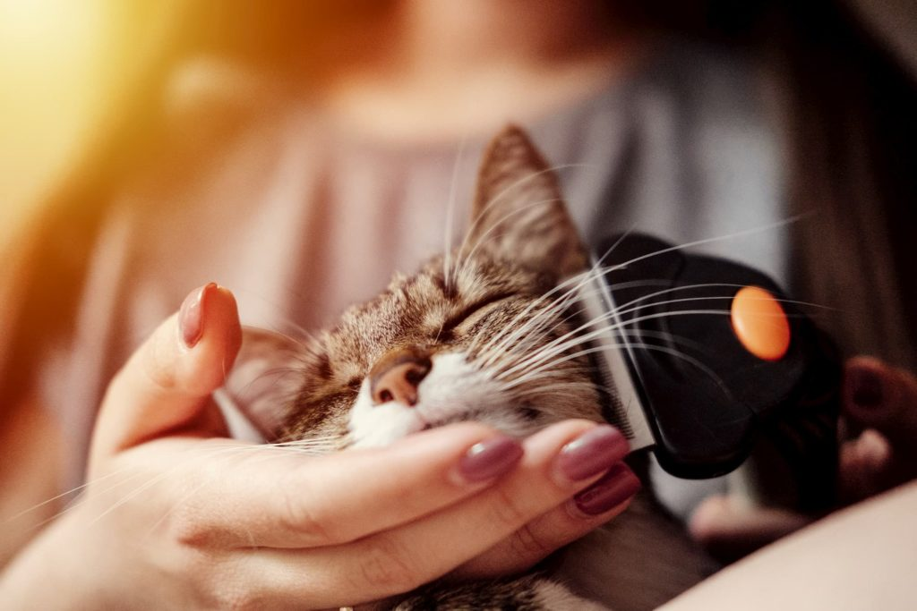 Cat being combed with Furminator deShedding tool