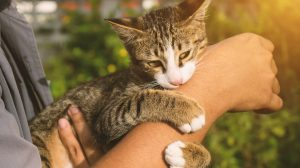 Cat biting man's arm