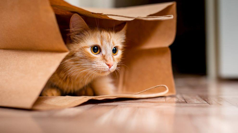 Ginger cat hiding in paper bag