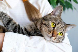 Grey tabby cat being held in arms